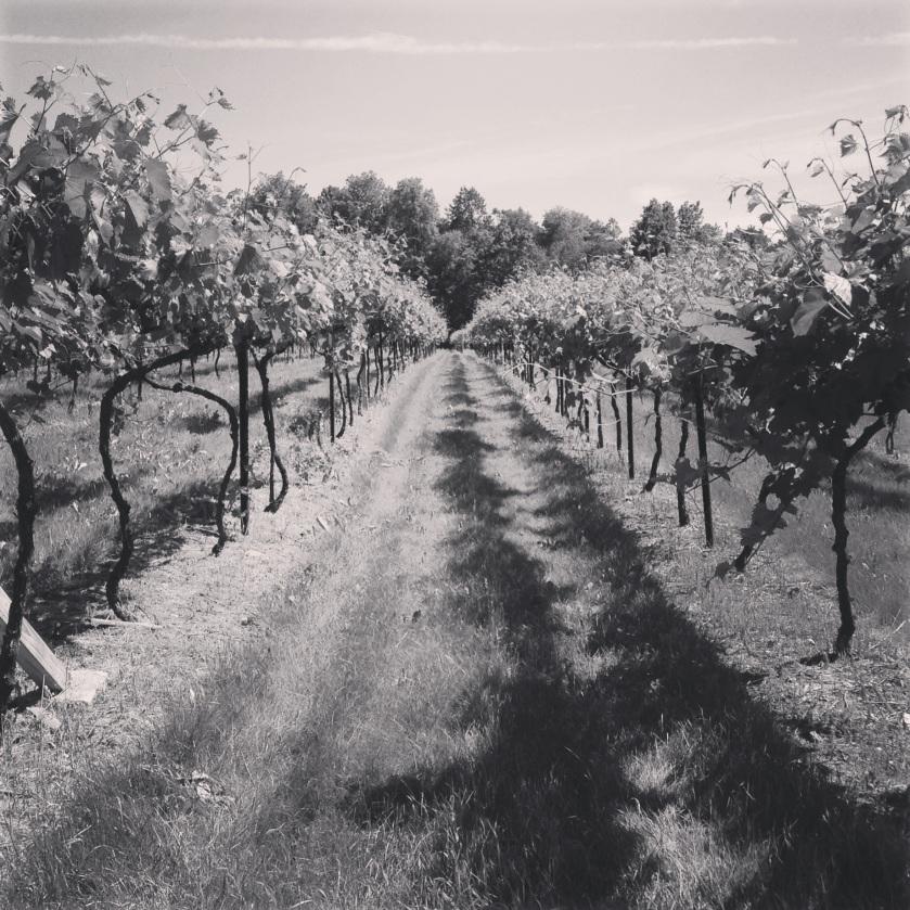 Vermont vineyard | raisonné blog